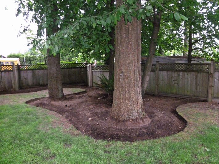 Backyard Makeover 13