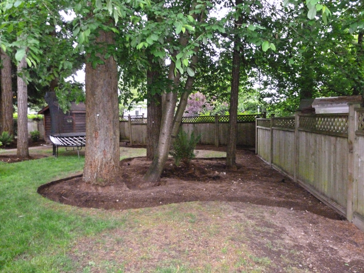 Backyard Makeover 14