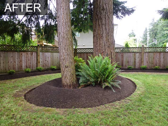 Backyard Makeover 31