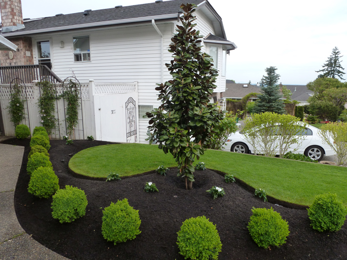 Front Yard Makeover 17