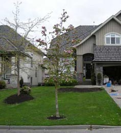 South Surrey home before Fabulous Flower Beds